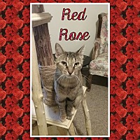 Adopt A Pet :: Red Rose - Cedar Springs, MI