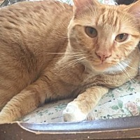 Adopt A Pet :: Meep (COURTESY 6-27-17) - Lovingston, VA