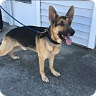 Adopt A Pet :: Thor 5357