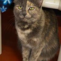Adopt A Pet :: Lexi (Cocoa Center) - Cocoa, FL