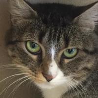 Adopt A Pet :: Tootsie 458-17 - Cumming, GA
