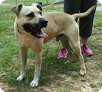 Shepherd (Unknown Type)/Black Mouth Cur Mix Dog for adoption in Union Springs, Alabama - Newton