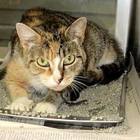 Adopt A Pet :: Mama Cita - Indiana, PA