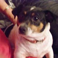 Adopt A Pet :: Lorna - ST LOUIS, MO