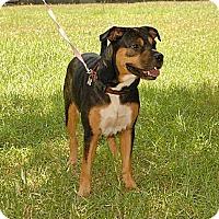Adopt A Pet :: Gina - Bryan, TX
