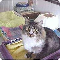 Adopt A Pet :: Pumpernickle - Quincy, MA