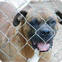 Adopt A Pet :: Jake - E Windsor, CT