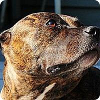 Adopt A Pet :: Sienna - Seattle, WA