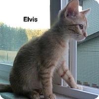 Adopt A Pet :: Elvis - Portland, OR