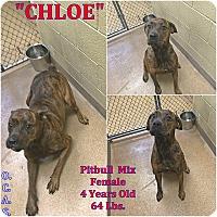 Adopt A Pet :: 1-11 Chloe - Triadelphia, WV