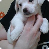 Adopt A Pet :: Jeneva - Thousand Oaks, CA