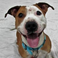 Adopt A Pet :: Salima - Twinsburg, OH