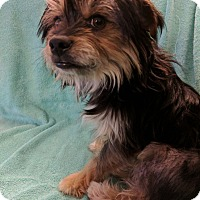 Adopt A Pet :: Elvis - San Francisco, CA