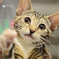 Adopt A Pet :: Rae - Tampa, FL