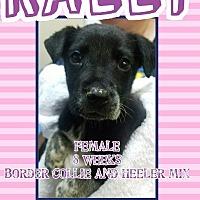 Adopt A Pet :: Rally - Ogden, UT