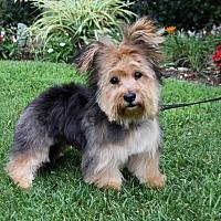 Adopt A Pet :: PEANUT - Newport Beach, CA