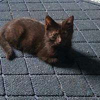 Adopt A Pet :: Snuffy - Somerset, KY