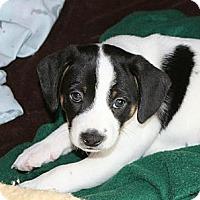 Adopt A Pet :: Zippy - Hastings, NY