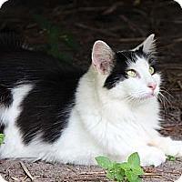 Adopt A Pet :: Elizabeth Taylor - Naples, FL