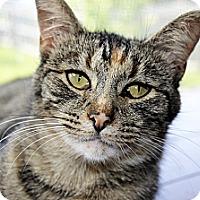 Adopt A Pet :: Luna - Xenia, OH