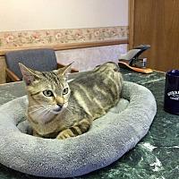 Adopt A Pet :: Lavinia - Riverside, CA