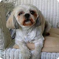Adopt A Pet :: Emma - Mississauga, ON