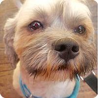 Adopt A Pet :: Jasper - La Mirada, CA