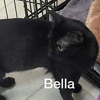 Adopt A Pet :: Isabella - Phoenix, AZ