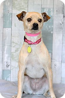 Chihuahua Mix Dog for adoption in Waldorf, Maryland - Stacy