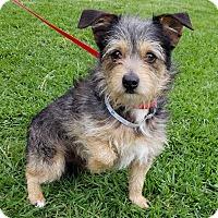 Adopt A Pet :: Walter - Los Angeles, CA