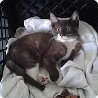 Adopt A Pet :: Felipe - La puente, CA