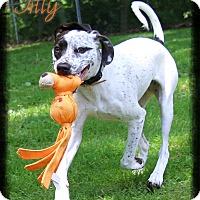 Adopt A Pet :: Tilly - Shippenville, PA