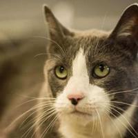 Adopt A Pet :: Bux - Carroll, IA