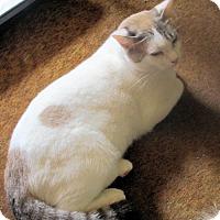Adopt A Pet :: Tilly - Rutherfordton, NC