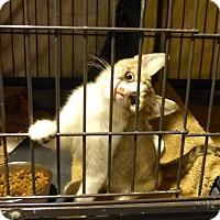 Adopt A Pet :: Amaroso - Springfield, PA