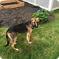 Adopt A Pet :: Prince - Charlestown, RI