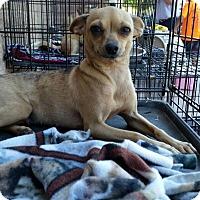 Adopt A Pet :: Jezebel - Bakersfield, CA