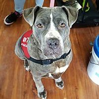Adopt A Pet :: Curly - Jackson, NJ