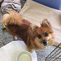 Adopt A Pet :: Nikki - Ft. Lauderdale, FL