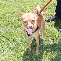 Adopt A Pet :: Susi - Boca Raton, FL