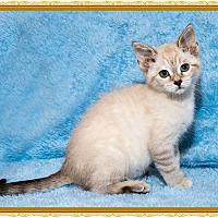 Adopt A Pet :: Blueberry Pie - Mt. Prospect, IL
