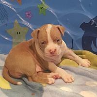 Adopt A Pet :: Roscoe Walker - Alpharetta, GA