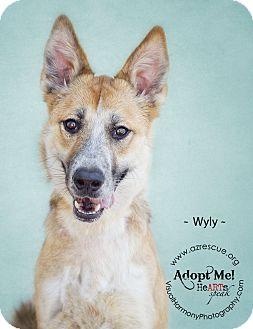 German Shepherd Dog Mix Dog for adoption in Phoenix, Arizona - Wyly