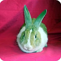 Adopt A Pet :: Pumpkin - Los Angeles, CA