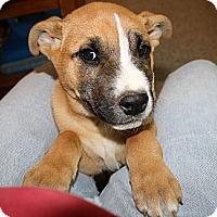 Adopt A Pet :: Bin - Glastonbury, CT