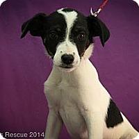 Adopt A Pet :: Alohi - Broomfield, CO