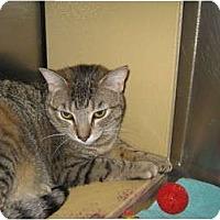 Adopt A Pet :: Gretel - Warminster, PA