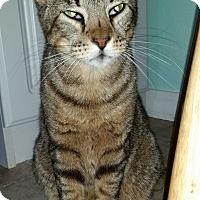 Adopt A Pet :: Nigel - San Antonio, TX