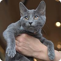 Adopt A Pet :: Jackie - Brooklyn, NY