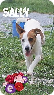 Pointer Mix Dog for adoption in Mt Sterling, Kentucky - Sally